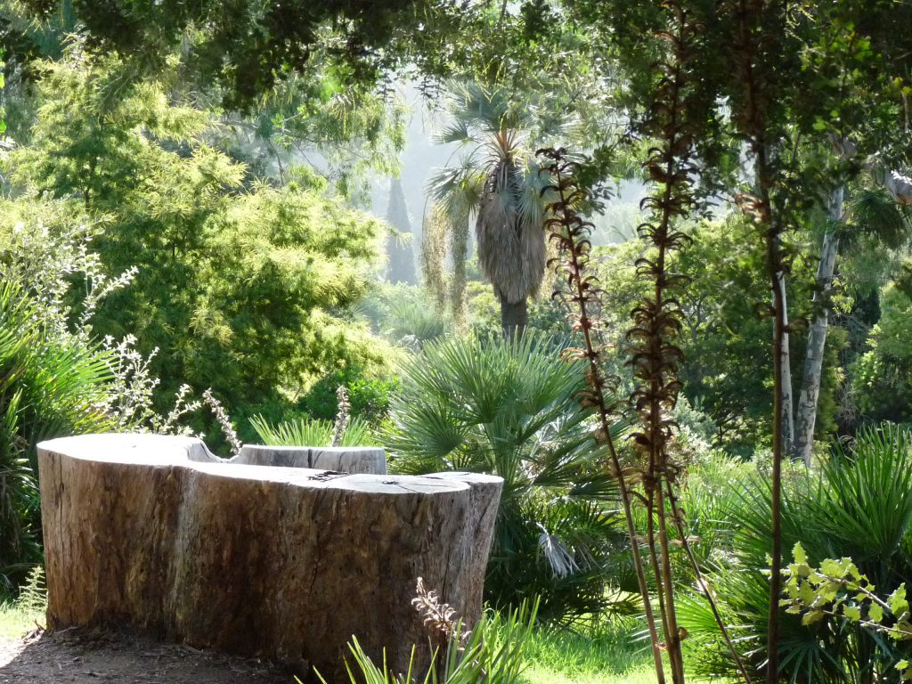eucalyptus Australie